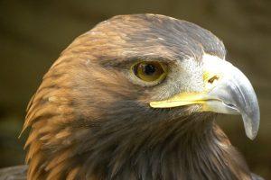 Experiencia ornitologica